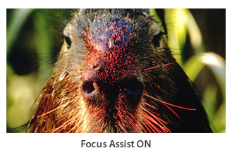 Focus Assist